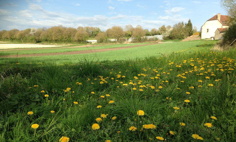 Un de nos champs et la maison