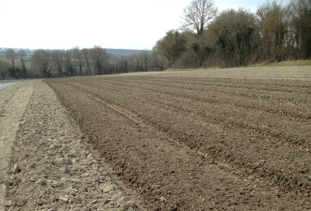 Un champ après le travail de la terre