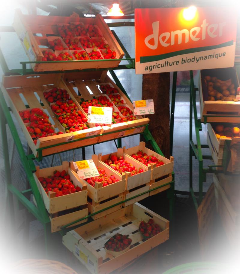 Nos 3 variétés de fraises