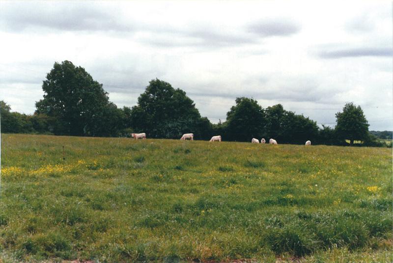 L'élevage de bovins des années 80